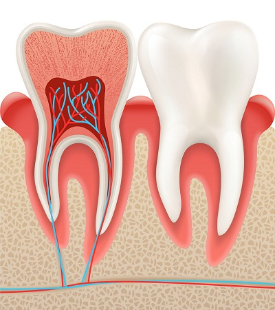 Restore Dental Health with Root Canal Therapy